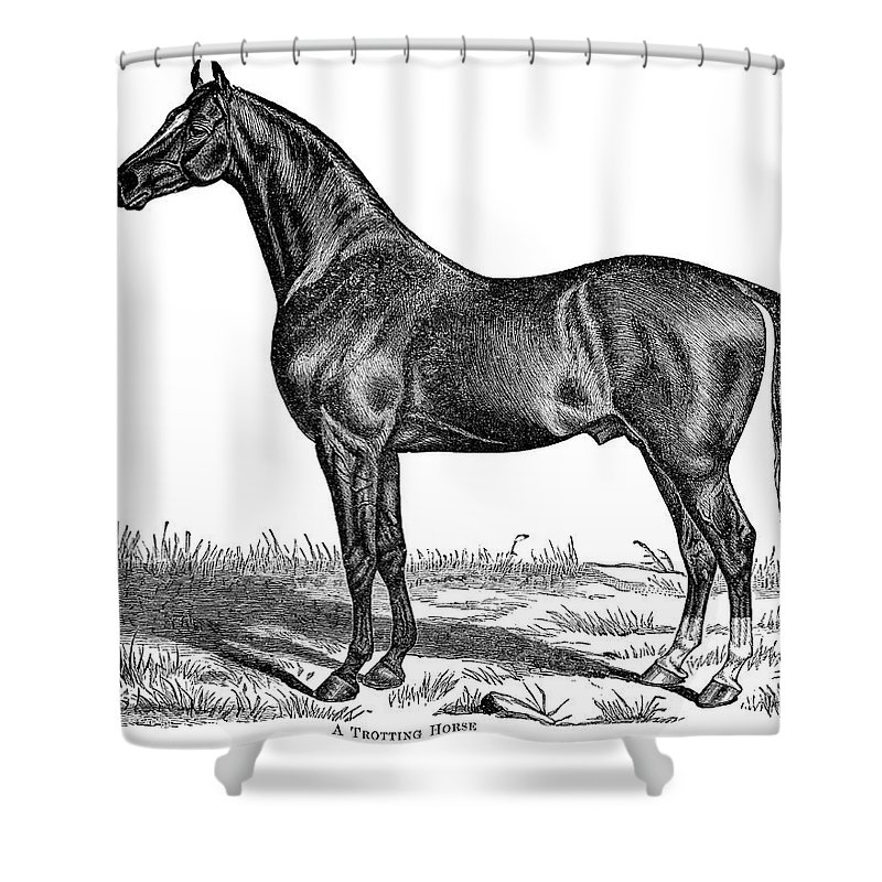 Horse Shower Curtain featuring the digital art Trotting Horse Engraving by Nnehring