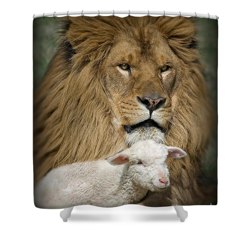 Lion And Lamb Shower Curtain featuring the photograph True Companions by Wildlife Fine Art
