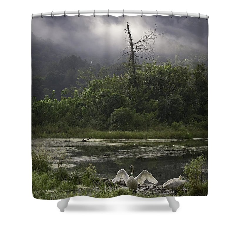 Trumpeter Swans Shower Curtain featuring the photograph Trumpeter Swans At Sunrise by Michael Dougherty