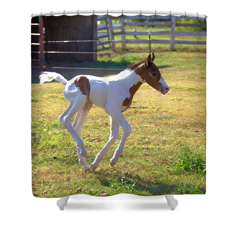 5289 Shower Curtain featuring the photograph Trying Out The New Legs by Gordon Elwell