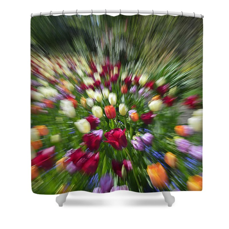 Blue Sky Shower Curtain featuring the photograph Tulip Explosion by Claudio Bacinello