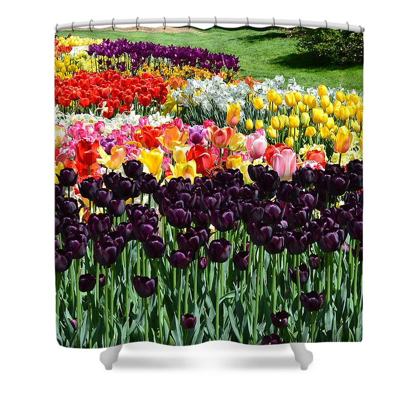 Flowers Shower Curtain featuring the photograph Tulip Field 1 by Wanda J King