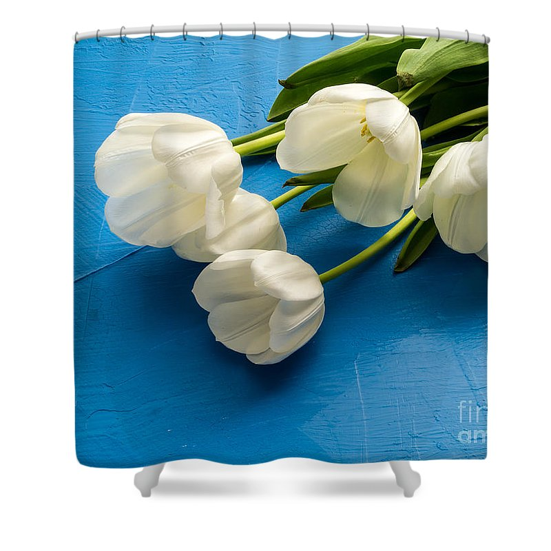 Tulips Shower Curtain featuring the photograph Tulip Flowers Over Blue by Edward Fielding