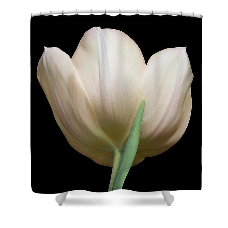Peach Tulip Shower Curtain featuring the photograph Tulip #2 by Judy Whitton