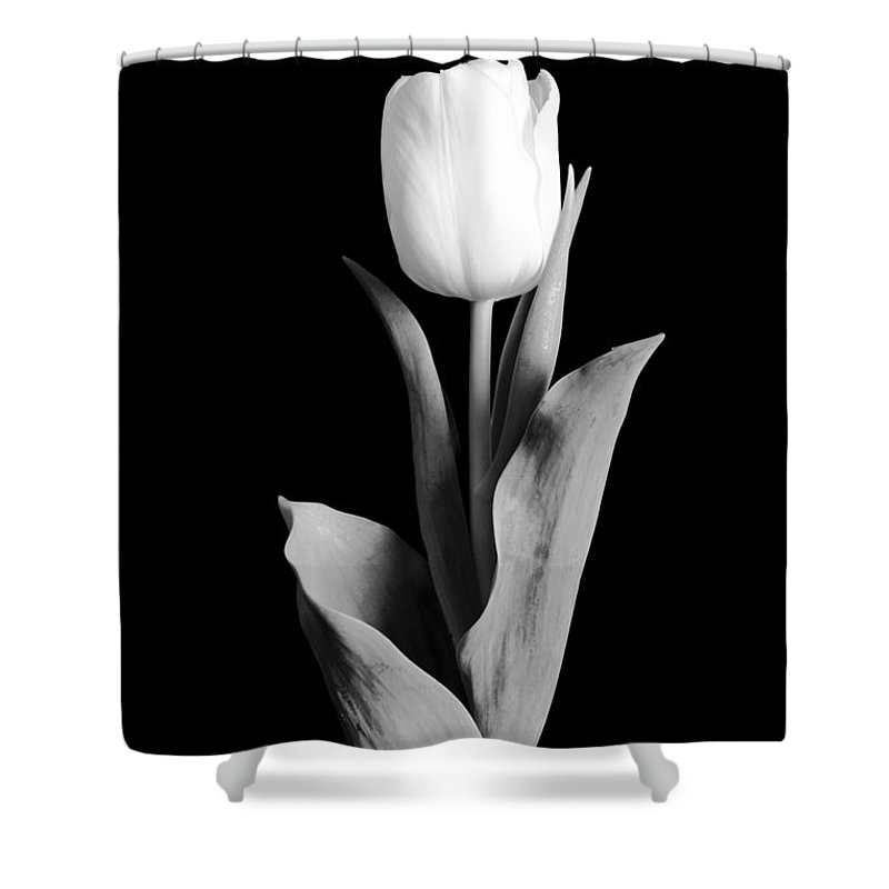 Tulip Shower Curtain featuring the photograph Tulip by Sebastian Musial