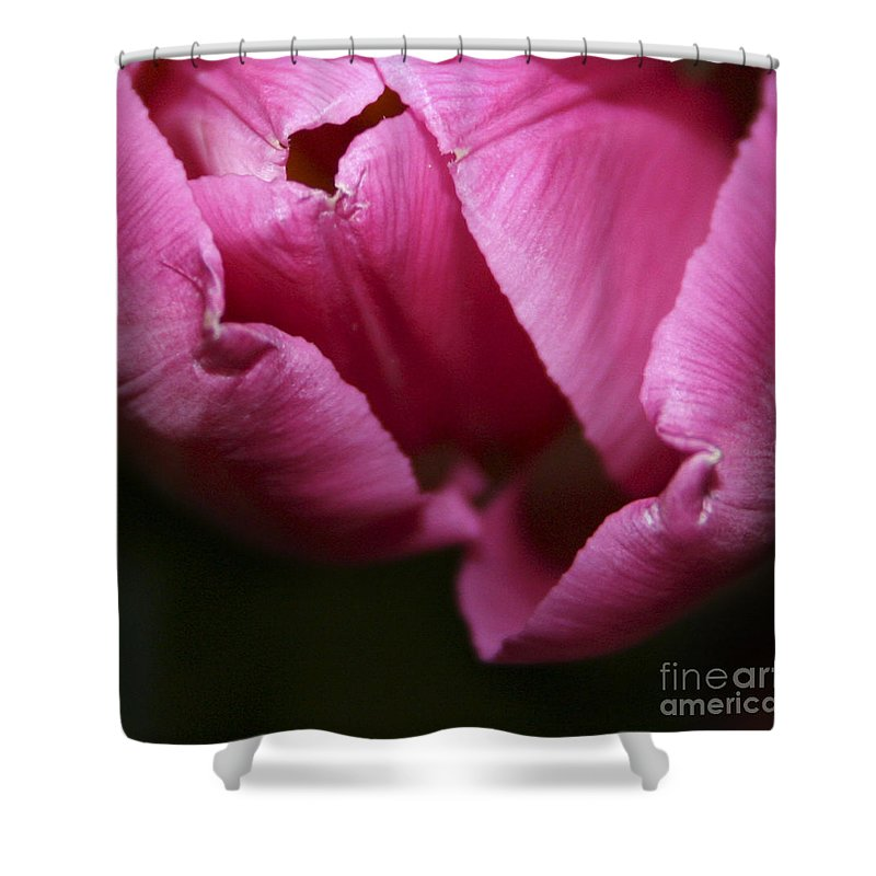 #tulip #nature Shower Curtain featuring the photograph Tulip 3 by Jacquelinemari
