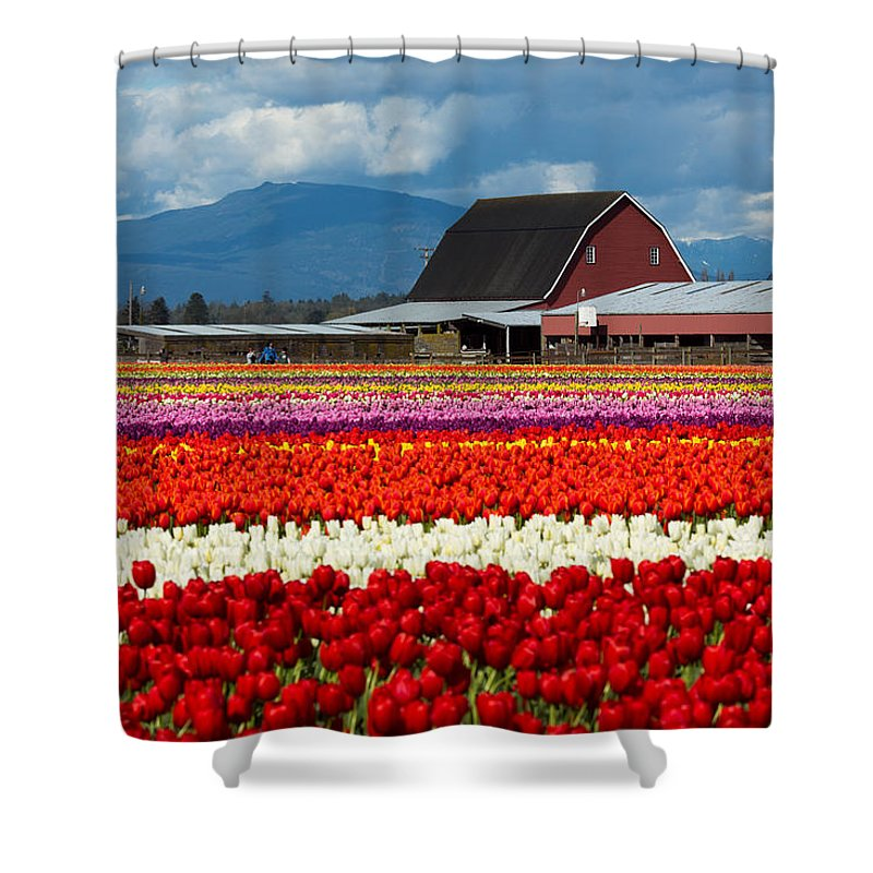 Tulip Shower Curtain featuring the photograph Tulips And Barn by Bob Stevens