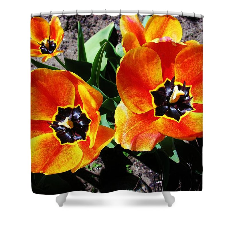 Tulip Shower Curtain featuring the photograph Tulips by Sherman Perry