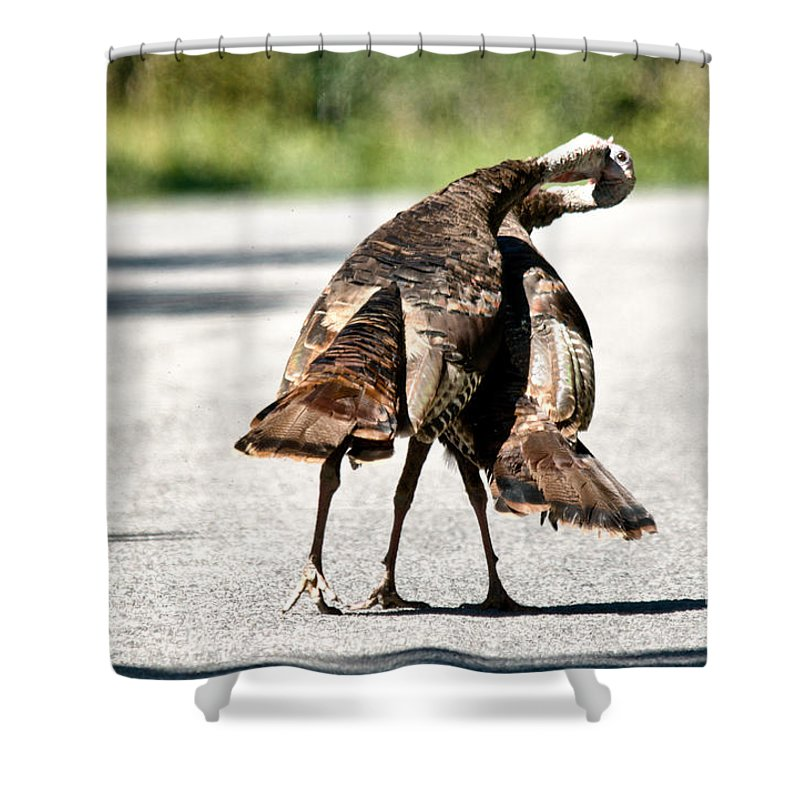 Turkey Shower Curtain featuring the photograph Turkey Fight by Cheryl Baxter