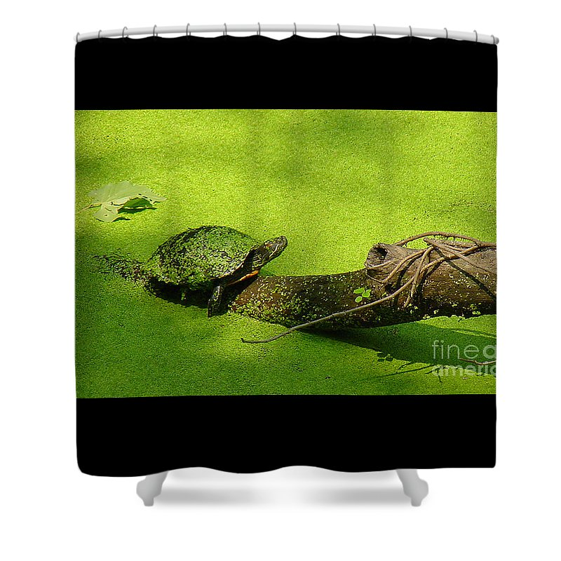 Turtle Shower Curtain featuring the photograph Turtle-190 by Gary Gingrich Galleries