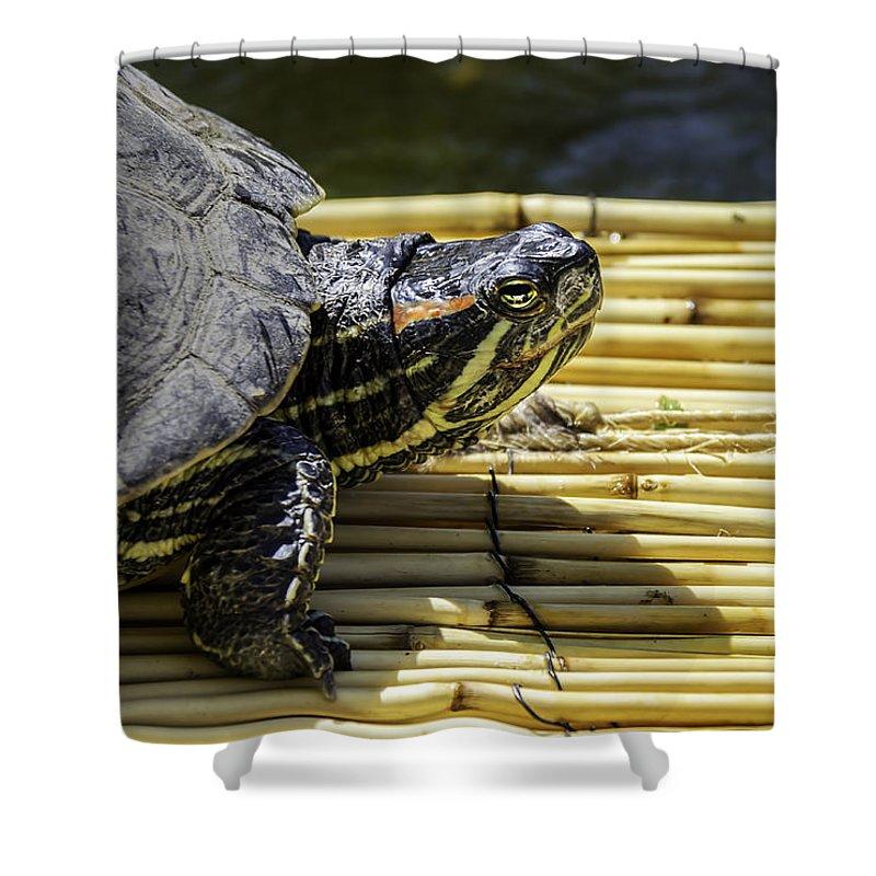 Turtle Shower Curtain featuring the photograph Tutle On Raft by LeeAnn McLaneGoetz McLaneGoetzStudioLLCcom