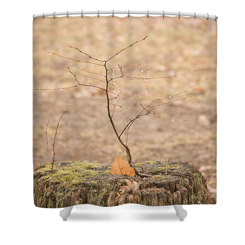 Flower Shower Curtain featuring the mixed media Twigtacular by Trish Tritz