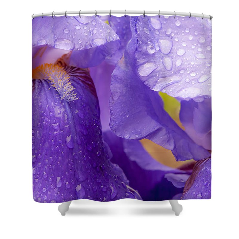Bearded Siberian Iris Shower Curtain featuring the photograph Twin Iris by Sabine Edrissi