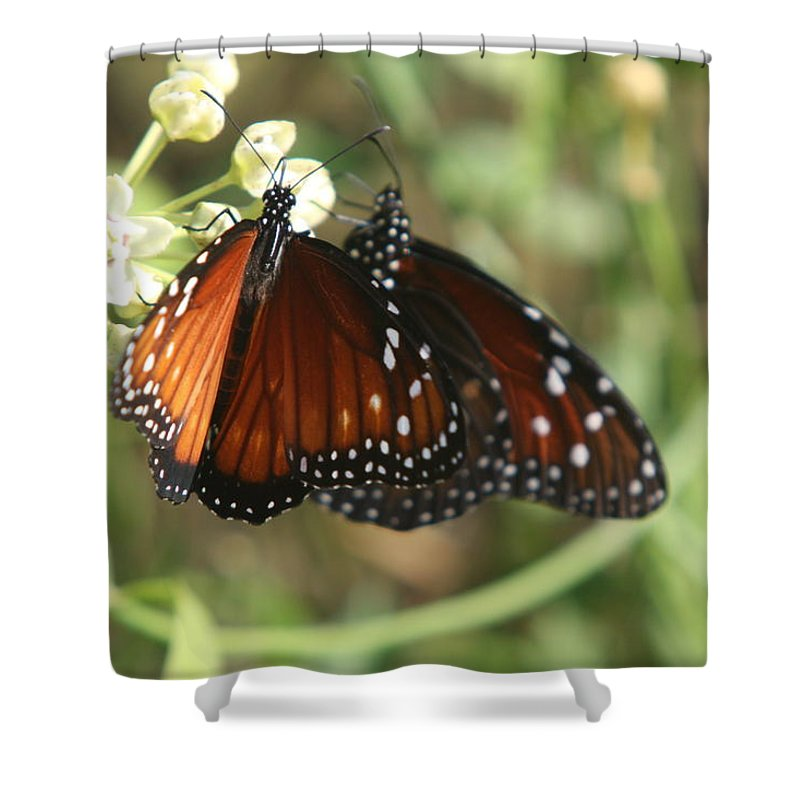 Butterfly Shower Curtain featuring the photograph Two Butterflies by Christiane Schulze Art And Photography
