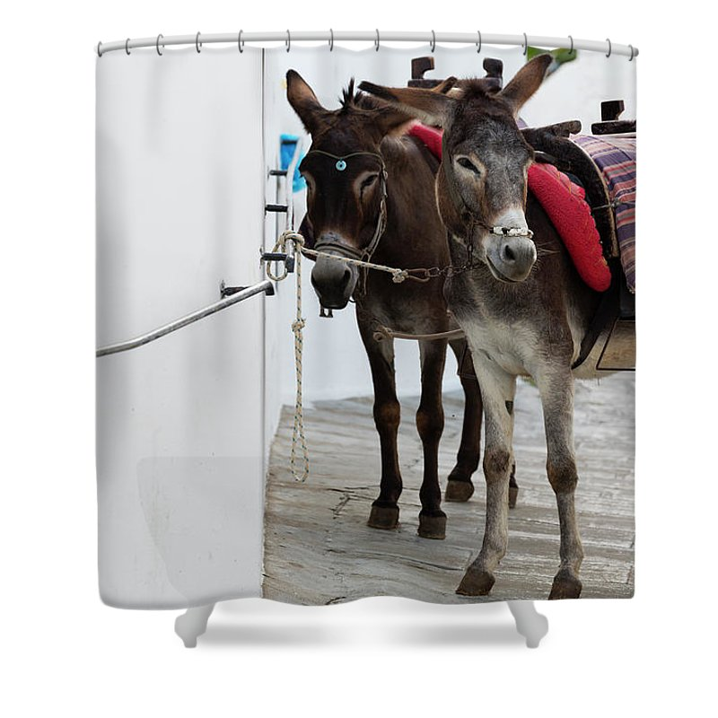 Working Animal Shower Curtain featuring the photograph Two Donkeys Tethered In The Street In by Martin Child