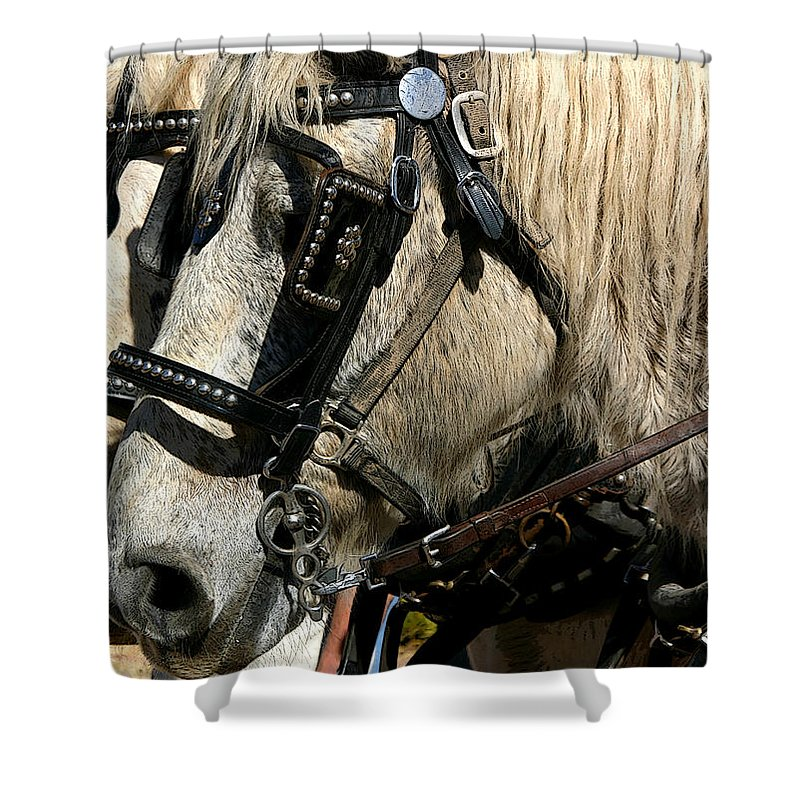 Horse Shower Curtain featuring the photograph Two Horse Power by Joe Kozlowski