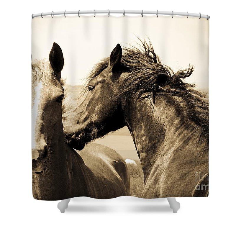 Two Shower Curtain featuring the photograph Two Horses by Lana Enderle