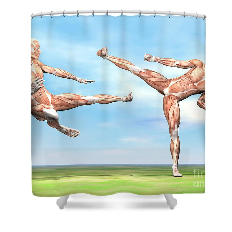 Muscle Tissue Shower Curtains