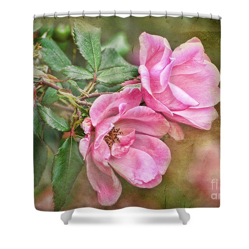 Nature Shower Curtain featuring the photograph Two Pink Roses I Blank Greeting Card by Debbie Portwood