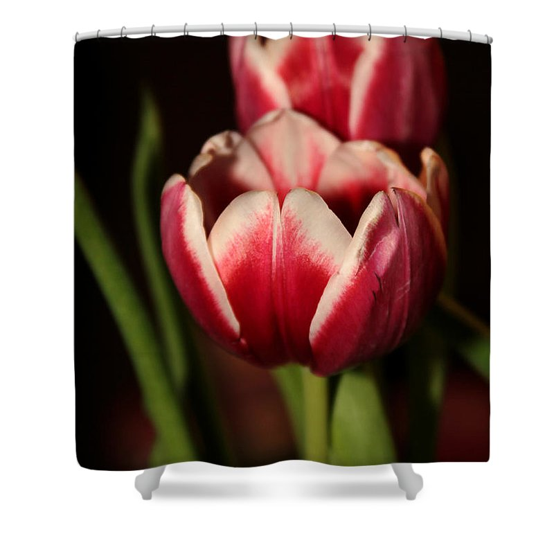 Macro Shower Curtain featuring the photograph Two Red Tulips by Sabrina L Ryan