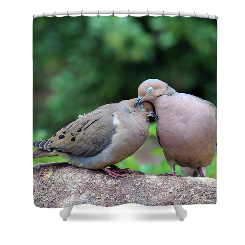 Doves For Sale >> Two Turtle Doves Shower Curtain For Sale By Cynthia Guinn