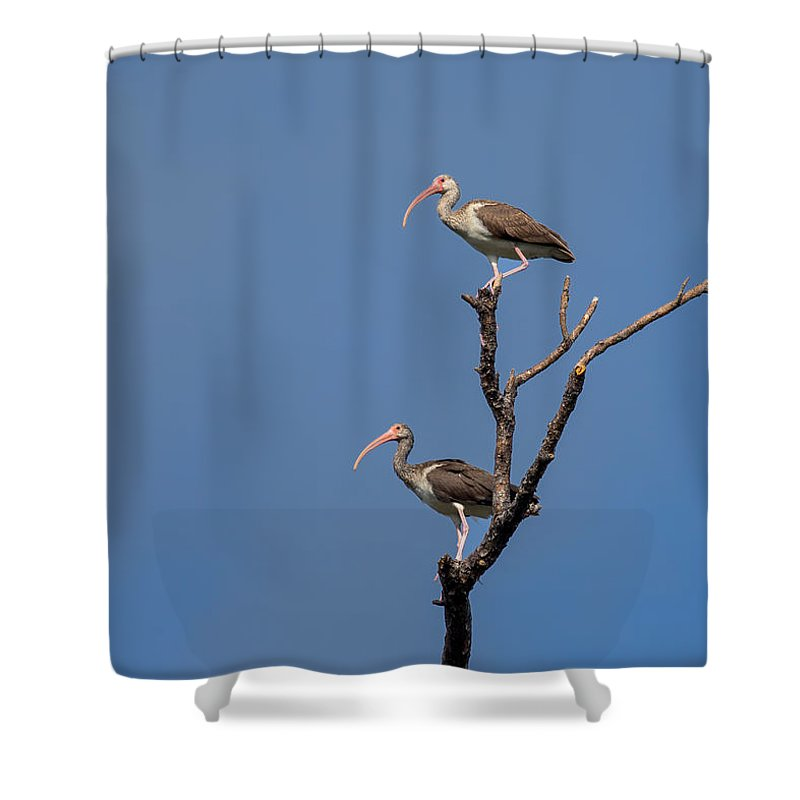 Nature Shower Curtain featuring the photograph Two Youngsters In A Tree by John M Bailey