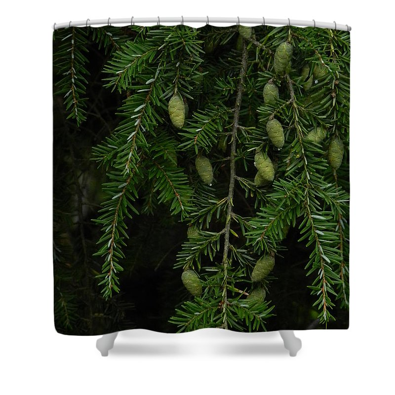 Tyler Shower Curtain featuring the photograph Tyler Baby Pinecones 1 by Heather Jane