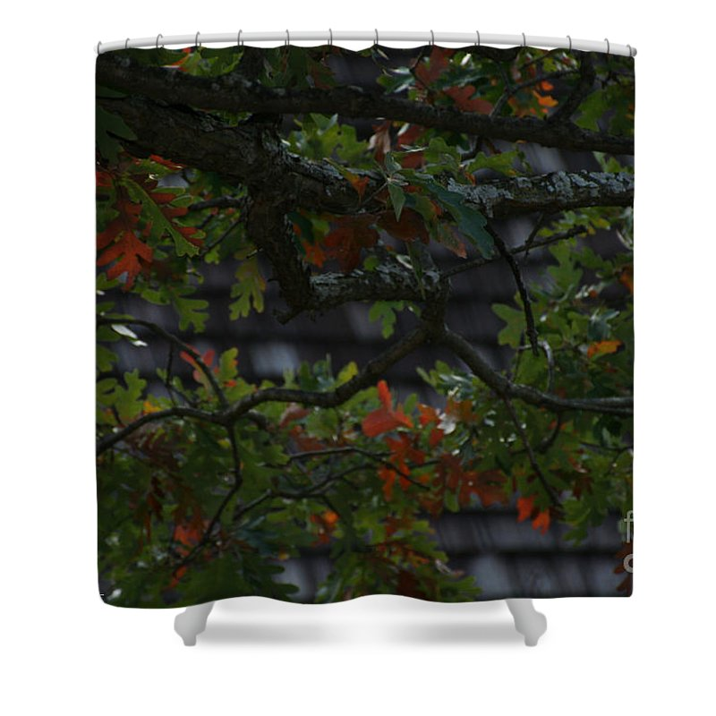 Flower Shower Curtain featuring the photograph Under The Old Oak Tree by Susan Herber
