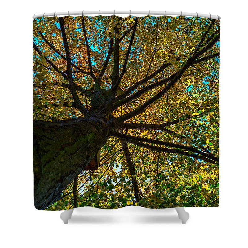 Under The Trees Skirt Shower Curtain featuring the photograph Under The Tree S Skirt by Tgchan