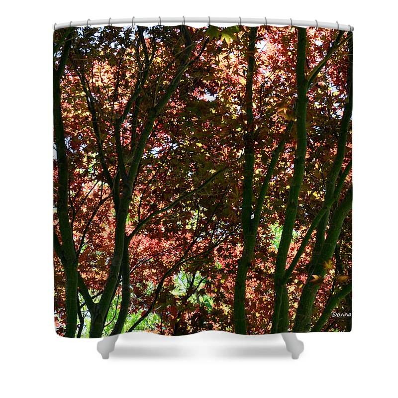 Maple Tree Shower Curtain featuring the photograph Under Your Protection by Donna Blackhall