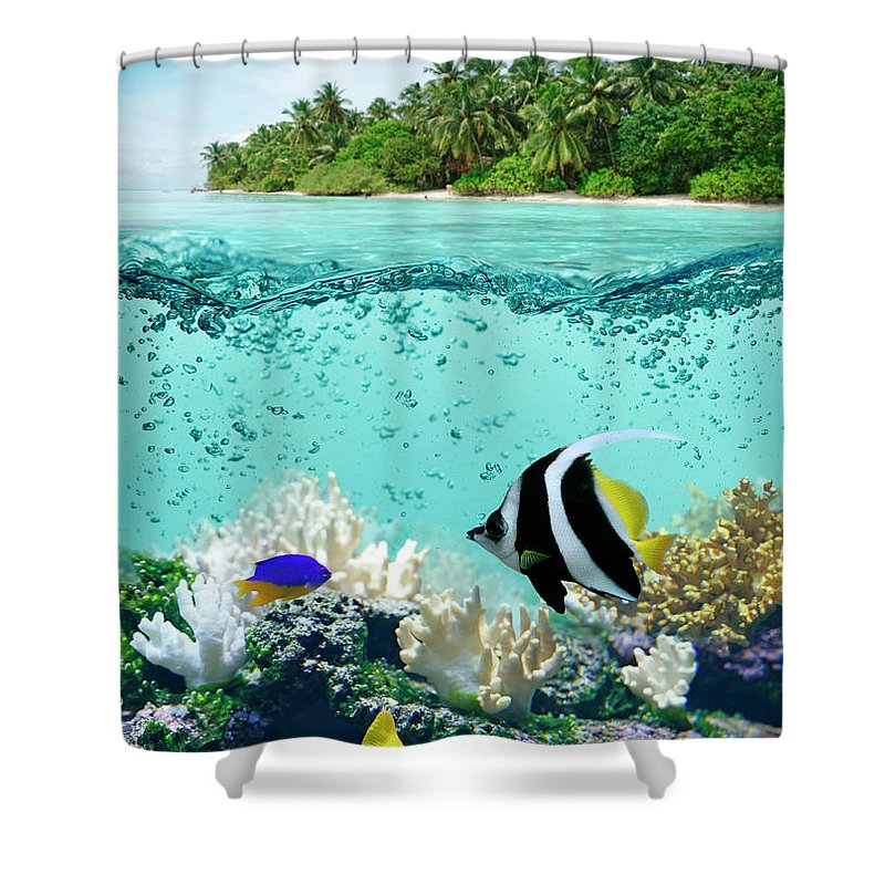 Bedrock Shower Curtain featuring the photograph Underwater Life In Tropical Sea by Narvikk