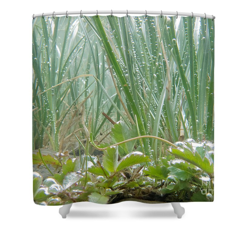 Air Shower Curtain featuring the photograph Underwater Shot Of Submerged Grass And Plants by Stephan Pietzko