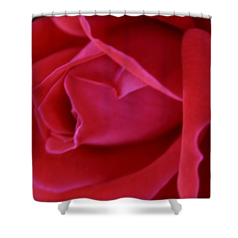 Rose Shower Curtain featuring the photograph Unfolding Glory by Mary Beglau Wykes
