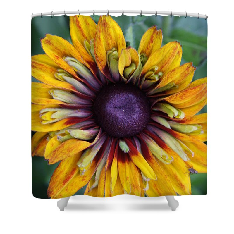 Sunflower Shower Curtain featuring the photograph Unique Sunflower by Christiane Schulze Art And Photography