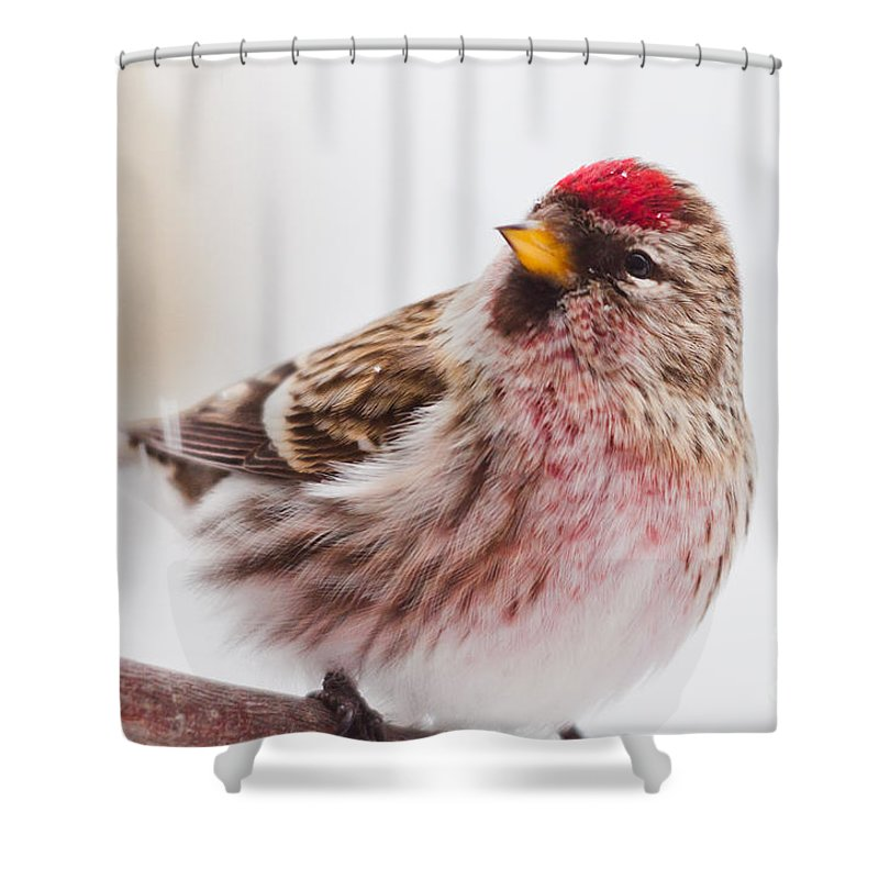 Landscapes Shower Curtain featuring the photograph Up Close by Cheryl Baxter