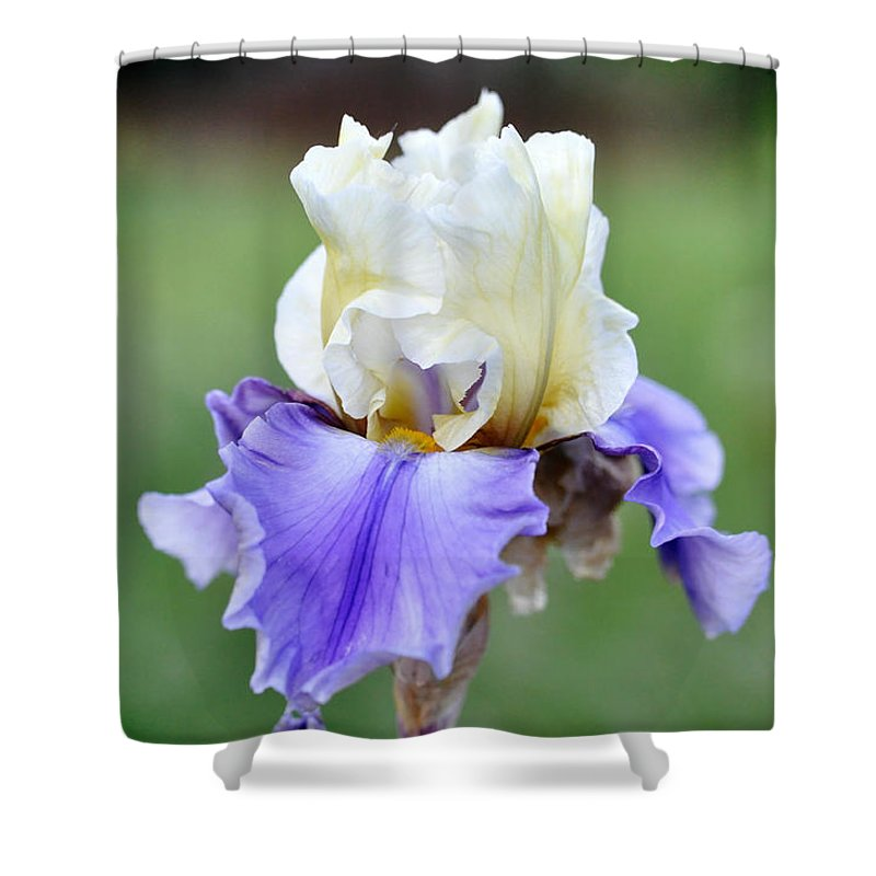 Iris Shower Curtain featuring the photograph Up Close Elegant Iris by Teri Schuster