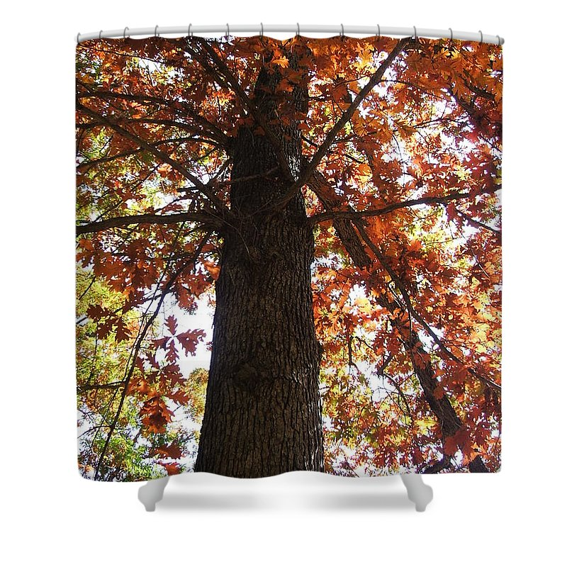 Tree Shower Curtain featuring the photograph Up Fall by Minding My Visions by Adri and Ray