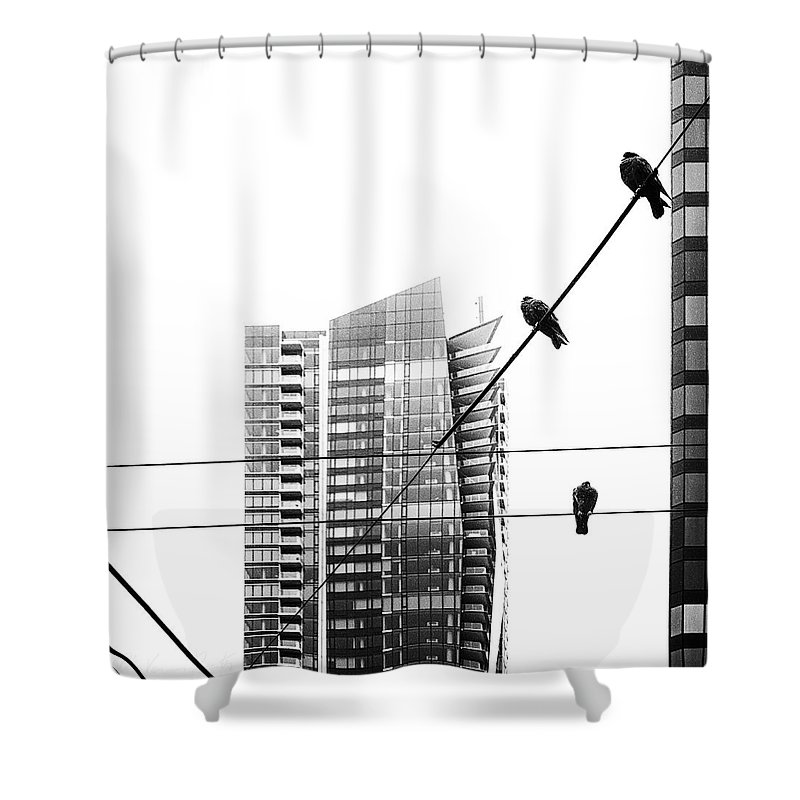 Animal Shower Curtain featuring the photograph Urban Pigeons On Wires by Peter v Quenter