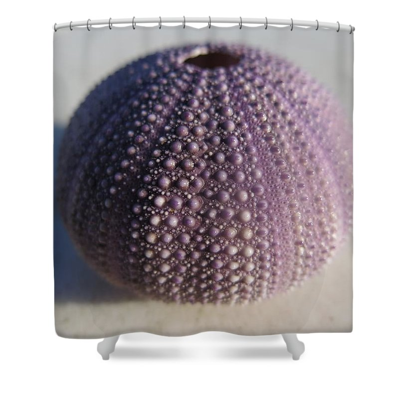 Urchin Shower Curtain featuring the photograph Urchin by FL collection