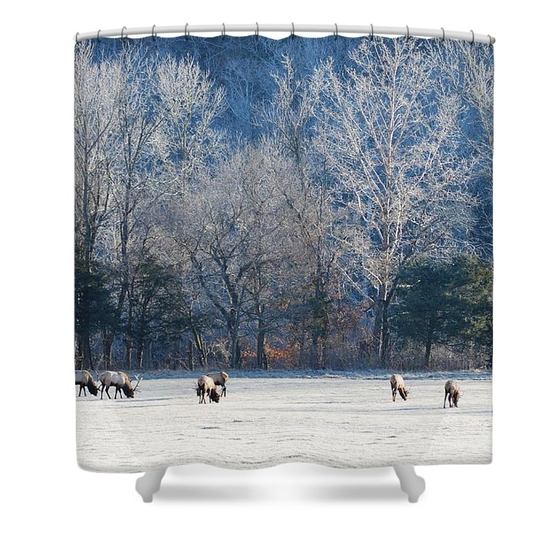Elk Shower Curtain featuring the photograph Valley Of Elk by Deanna Cagle