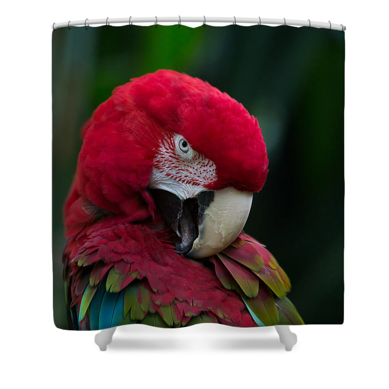 Pet Shower Curtain featuring the photograph Vanity-close Up Of A Green Winged Macaw by Eti Reid