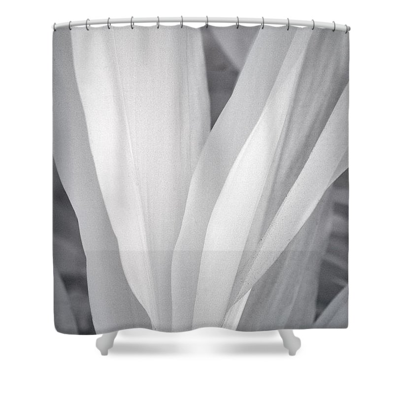 3scape Photos Shower Curtain featuring the photograph Veil by Adam Romanowicz