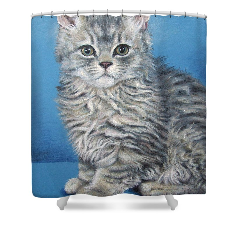 Cat Shower Curtain featuring the drawing Velvet Kitten by Nicole Zeug