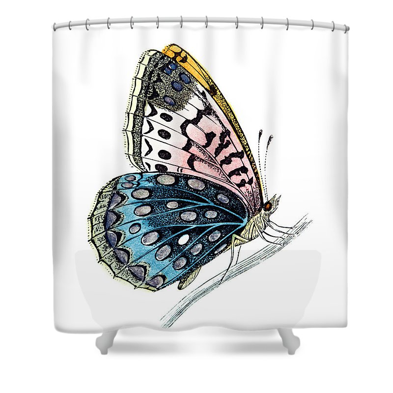 Engraving Shower Curtain featuring the digital art Venus Fritillary Butterfly by Andrew howe