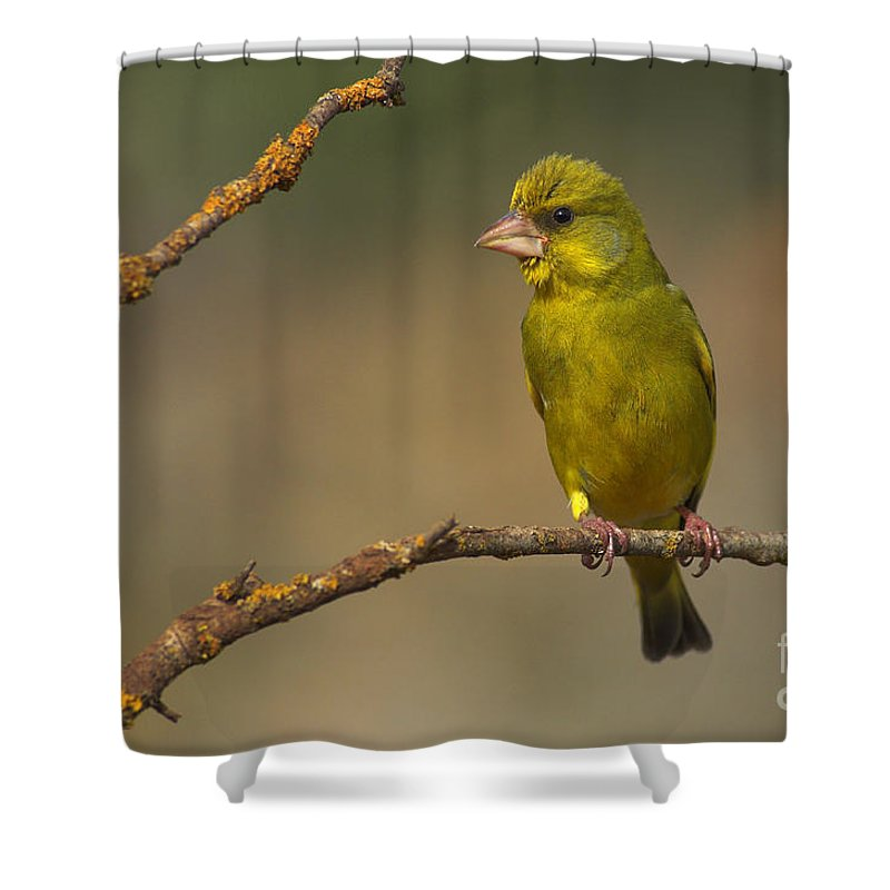 Greenfinch Shower Curtain featuring the photograph Greenfinch by Guido Montanes Castillo