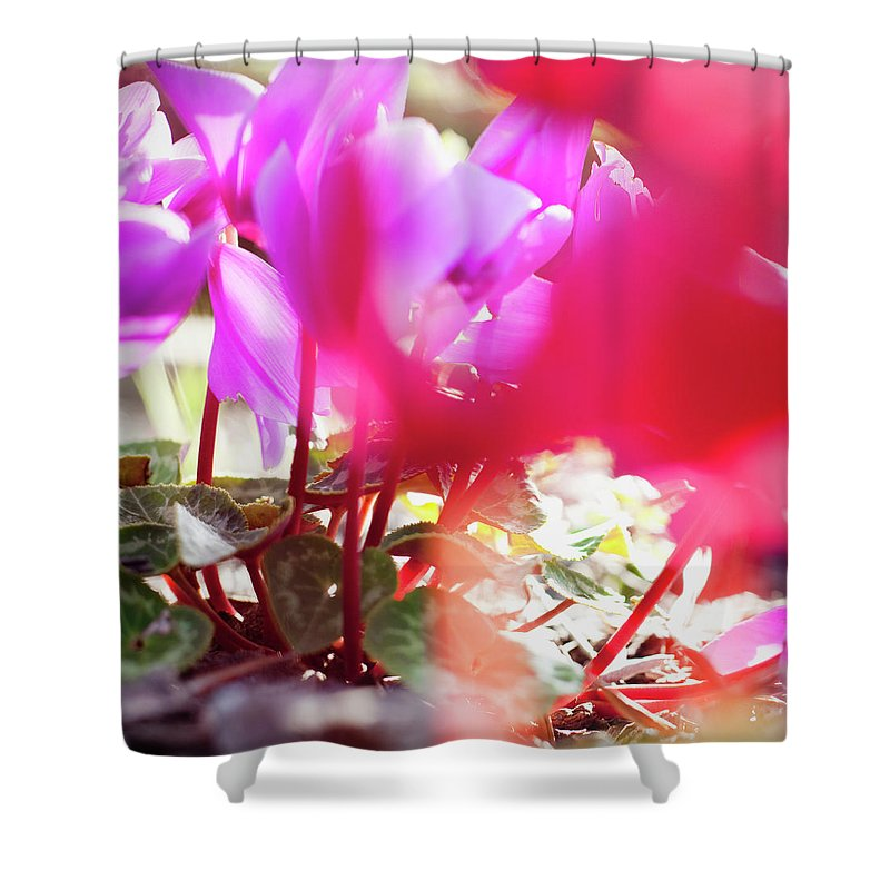 Shadow Shower Curtain featuring the photograph Vibrant Magenta Cyclamen In Bloom by Erika Pino