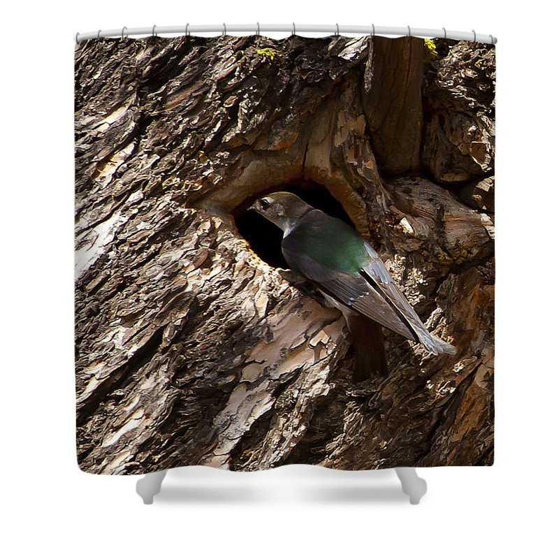 Cliff Swallow Shower Curtain featuring the photograph Viloet Winged Swallow-signed-#9682 by J L Woody Wooden