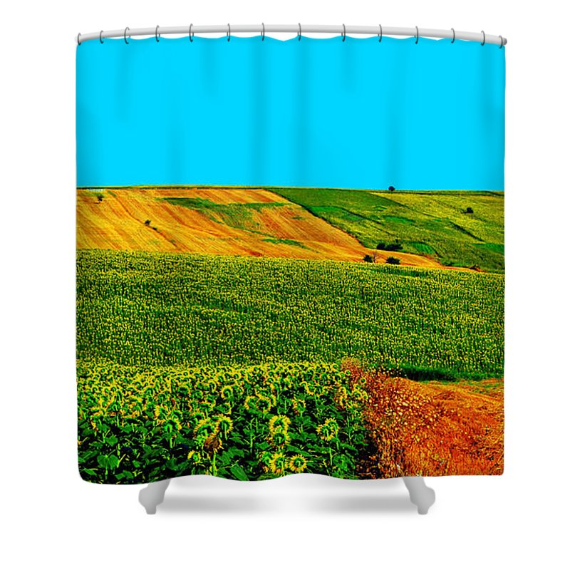 Sunflower Shower Curtain featuring the photograph Vincent Van Gogh's Inspiration by Zafer Gurel