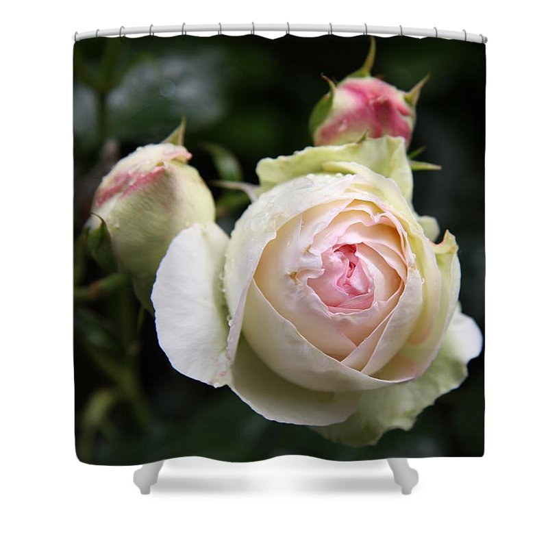 Rose Shower Curtain featuring the photograph Vintage Rose by Christiane Schulze Art And Photography