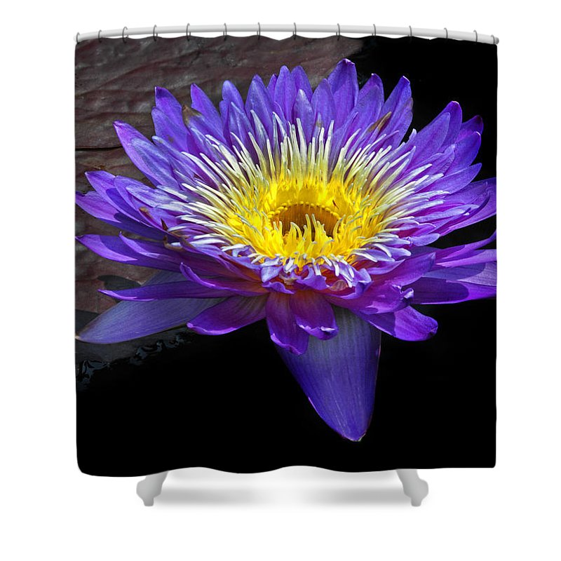 Waterlily Shower Curtain featuring the photograph Violet Waterlily by Dave Mills